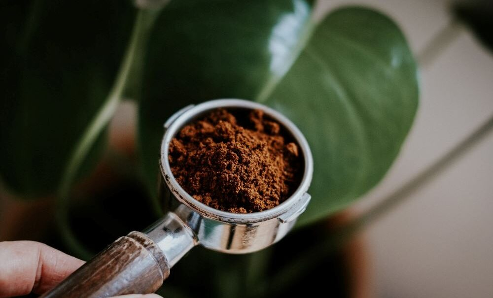 coffee grounds with plants]